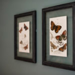 Close up on two framed butterfly prints